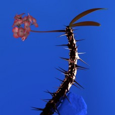 Flume : Skin Companion Ep Ii (12 Single)""